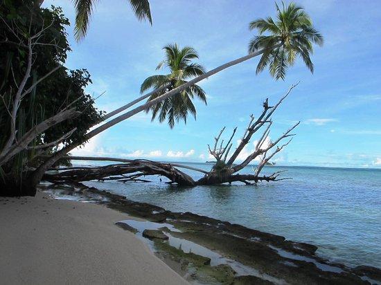 Conflict Bay Lodge: Waving palms of Marau Sound