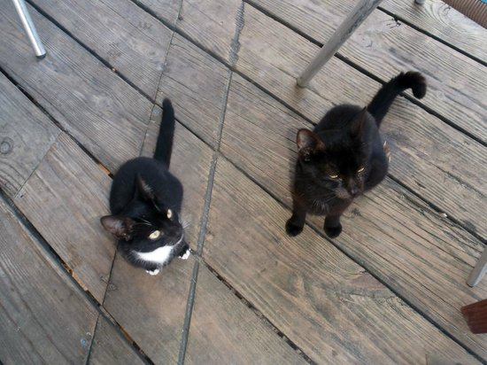 Kuyaba Hotel & Restaurant - Negril: Stray Kitties at Breakfast