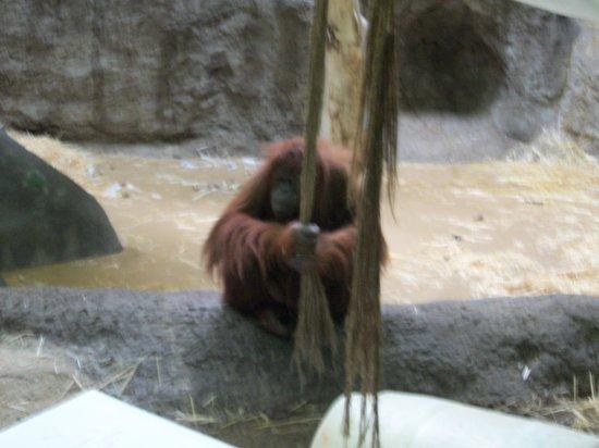 Racine Zoo: 100_2665.JPG
