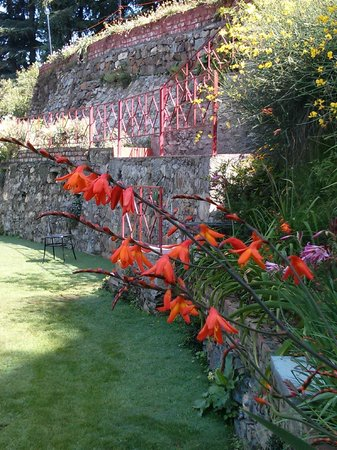 The Chalets Naldehra: Pretty flowers