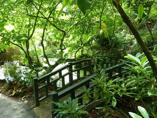 Glenfalloch Woodland Gardens : Bridge near cafe