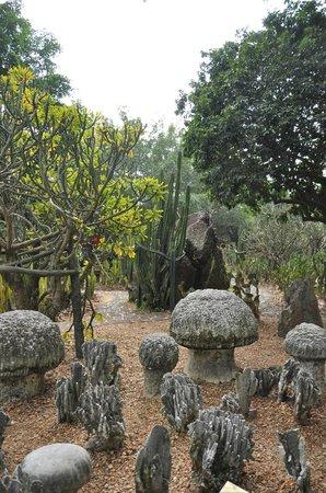 Rock Hill Volcanoe Haikou : Views of the garden