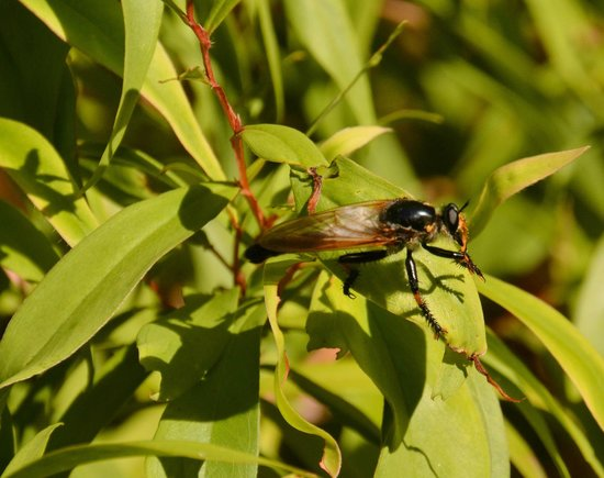 Forest Rise Eco Retreat: Interesting insect discovered during a walk in the bush