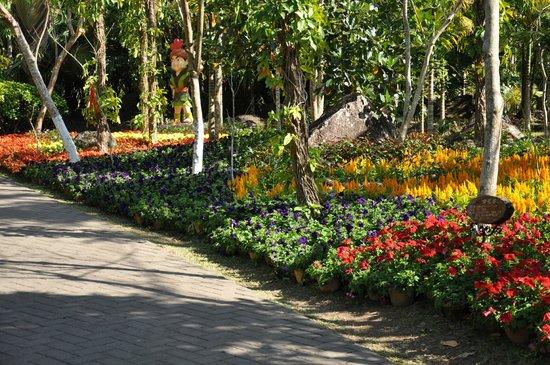 Yanuo Tropical Rain Forest Resort : Gardens