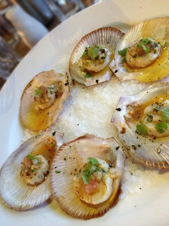 Fishheads : Hervey Bay scallops