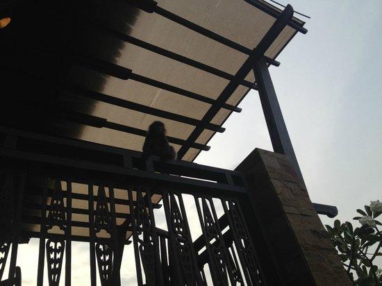 Railay Village Resort: Monkey