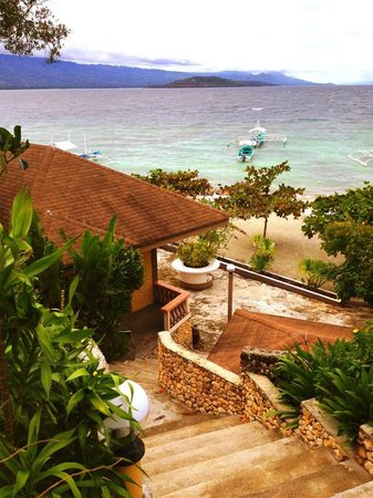 Turtle Bay Dive Resort : View around my room