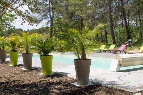 Le Mas de la Flaquière : Palmier au bord de la piscine