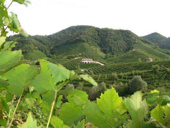 Soligo, Italia: Valdobbiadene Prosecco Superiore Land...where Perlage was born!