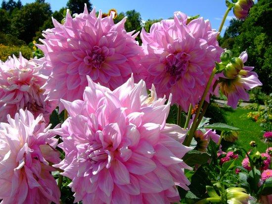 Botanischer Garten Muenchen-Nymphenburg: is scho schee wenns schee is