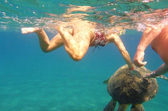 Malikia Resort Abu Dabbab: Schnorcheln mit Schildkröten