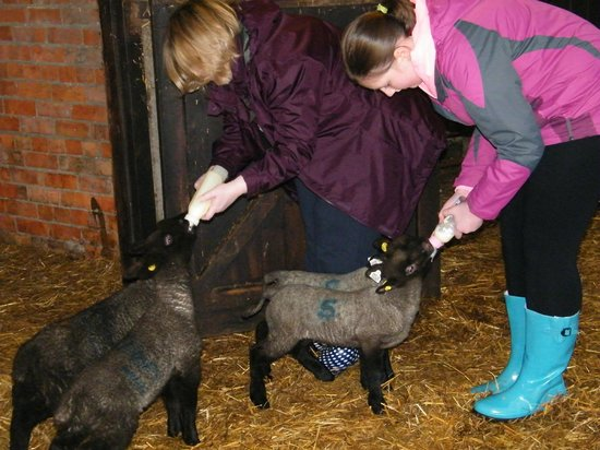 North Buckham Farm: Guests joining in
