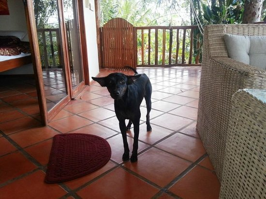 Kep Lodge: The friendly residence dog came for a visit together with the staff