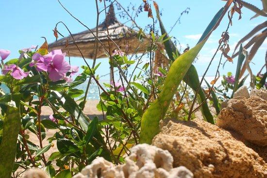 Atlantis Madagascar: Jardin