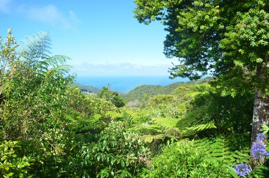 Lone Kauri Lodge: View from deck