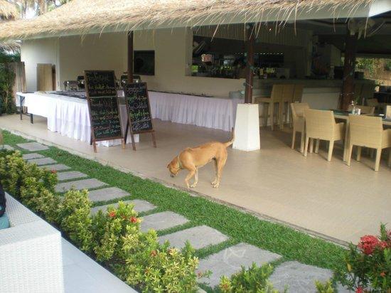 Shiva Samui: restaurant
