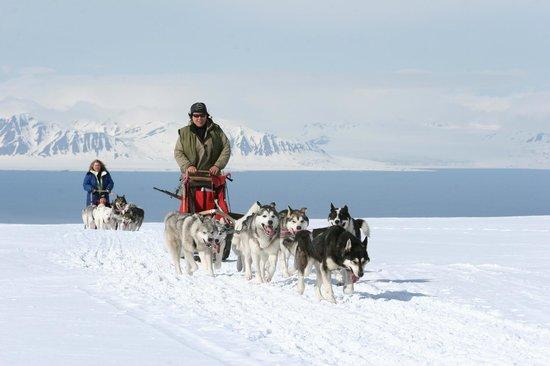 Svalbard Villmarkssenter - Day Tours: Dog sledding - Winter/Spring - Photo: Tommy Simonsen