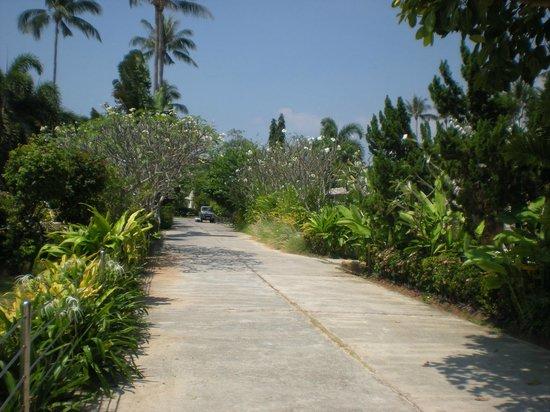 Shiva Samui: road to resort