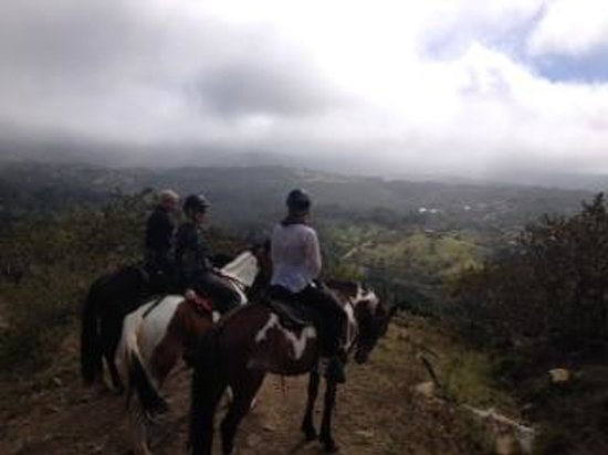 Sabine's Smiling Horses : On top of the world