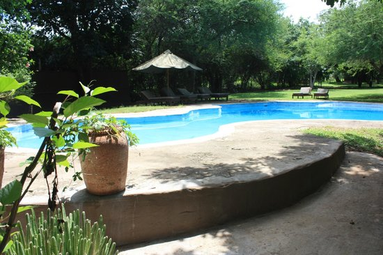 Elephant Valley Lodge: Poolbereich