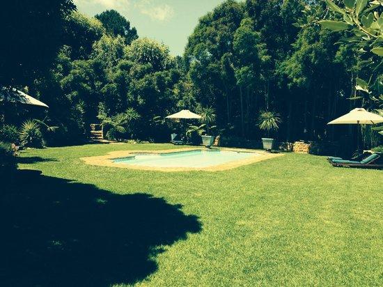 The Tarragon : The pool/garden
