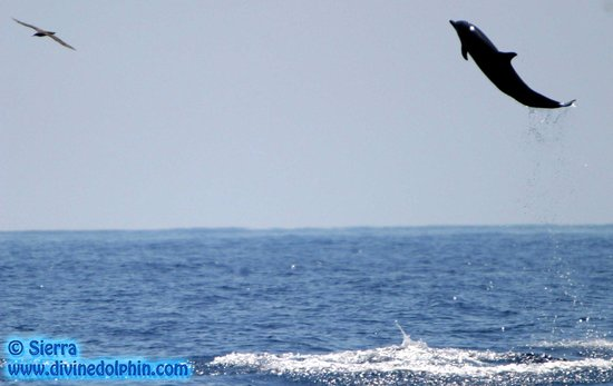Drake Bay, Costa Rica: We have flying dolphins here!