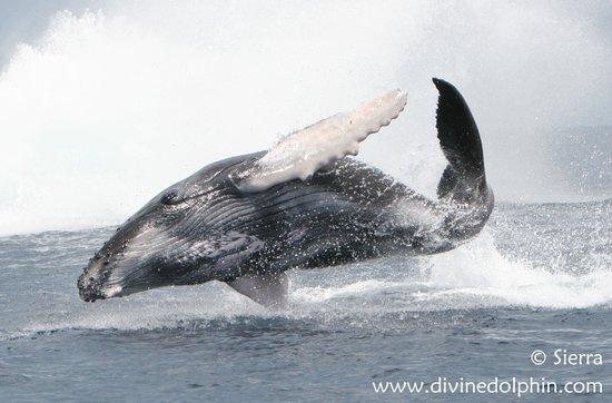 Drake Bay, Kosta Rika: And flying whales too!