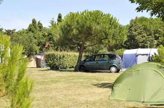 Camping Le Beaulieu : Emplacement camping