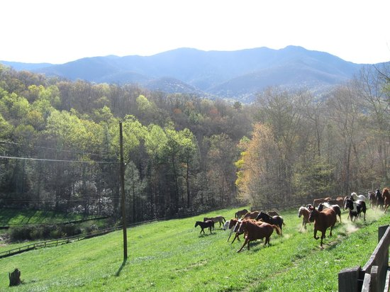 Clear Creek Guest Ranch: horses in pasture