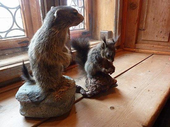 HOF ZUORT: Eichhörnchen und Murmeltier im Gasthaus