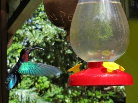 Au jardin des colibris : le ballet des colibris
