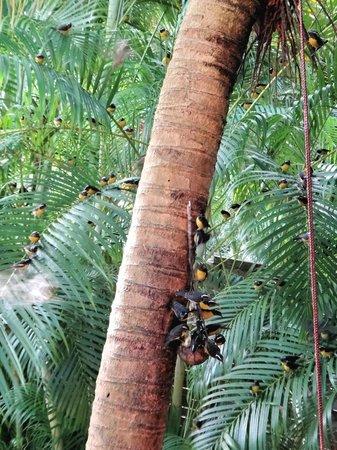 Au jardin des colibris : l'affluence des sucriers