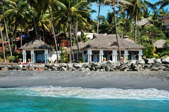 Palm Tree Heritage: Palm tree bungalows