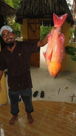 Coral Reef View Inn: Nihad con la cernia dei coralli