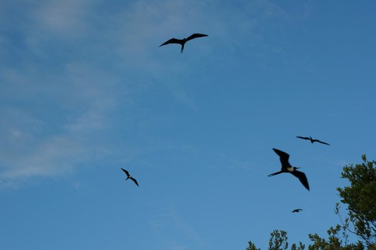 Riviera Adventours : At Bird Island
