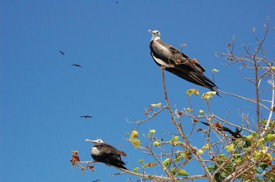 Uccelli su Isla Iguana