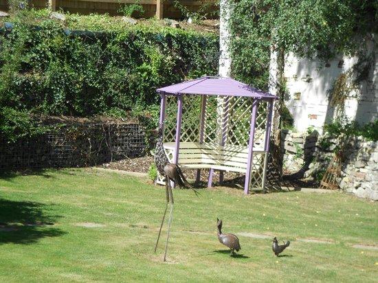 The Timbers Bed & Breakfast: garden 8