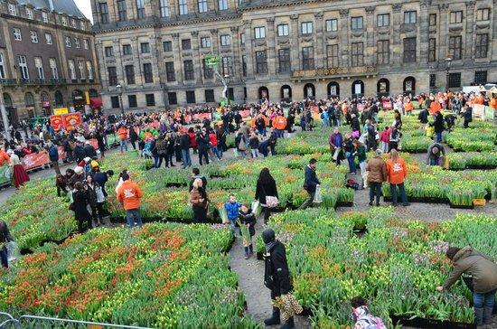 Dam Platz: Национальный день тюльпанов