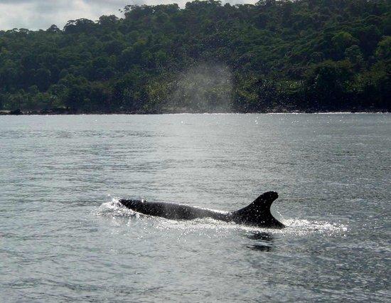 Drake Bay, Costa Rica: Pseudo Orcas by the Coast