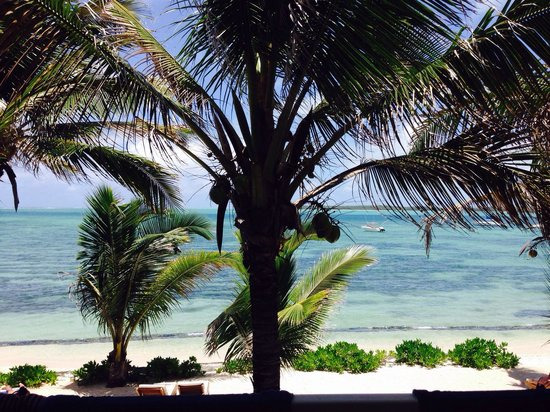 Tropical Attitude : View from the room