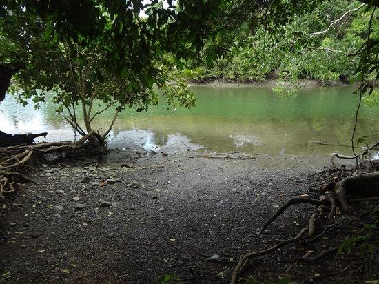 Дрейк-Бэй, Коста-Рика: Por ahí había un cocodrilo que no se ve