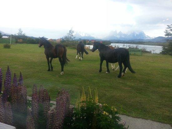 Hotel del Paine: Los caballos pasean libremente frente al comedor (foto hecha dentro del comedor)