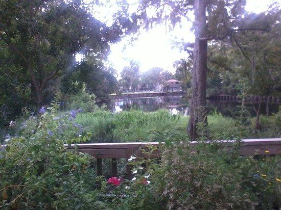 Palmettos on the Bayou: Palmetto's - outside view 4