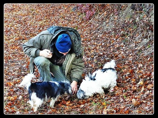 "Truffle Hunting at Les Pastras : Truffle hunting with ""truffle dogs"""