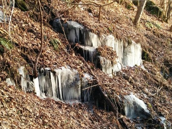 Amicalola Falls State Park : Ice on the way up...