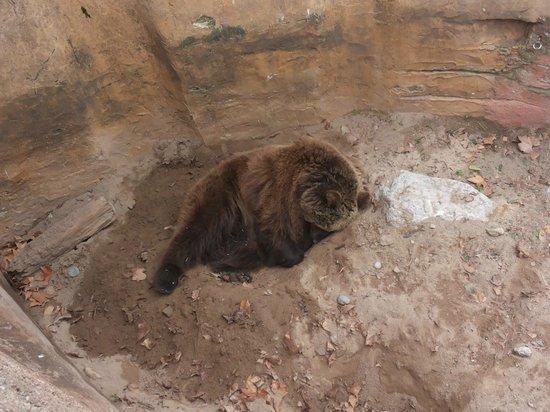 Zoo de Barcelona: L'orso Dormiente