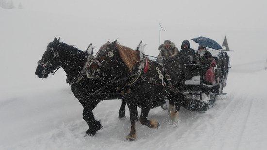 Rifugio Fuciade: Slitta trainata dai cavalli