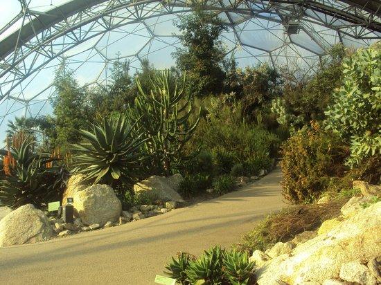 Eden Project: Mediterranean Biome