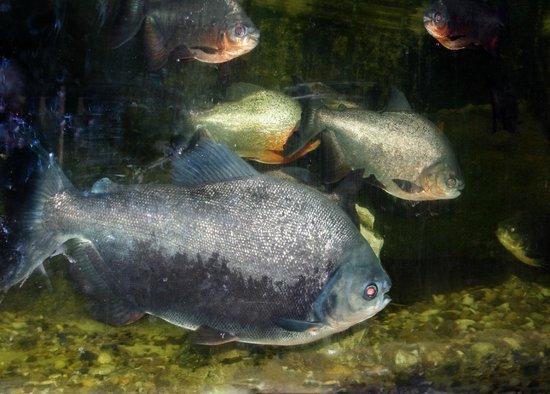 The Aquarium and the Black Sea Museum: компания