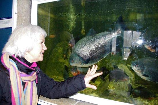 The Aquarium and the Black Sea Museum: у аквариума